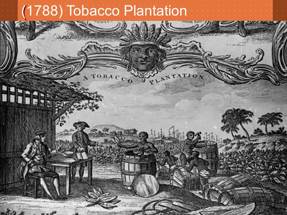 ( (1788) Tobacco Plantation
