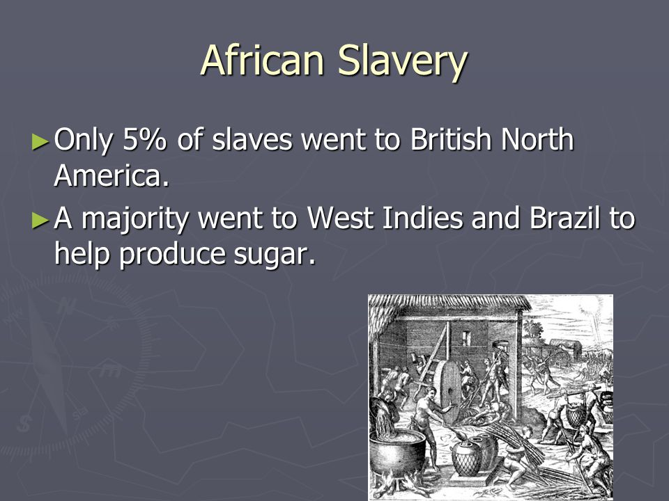 African Slavery ► Only 5% of slaves went to British North America. ► A majority went to West Indies and Brazil to help produce sugar.