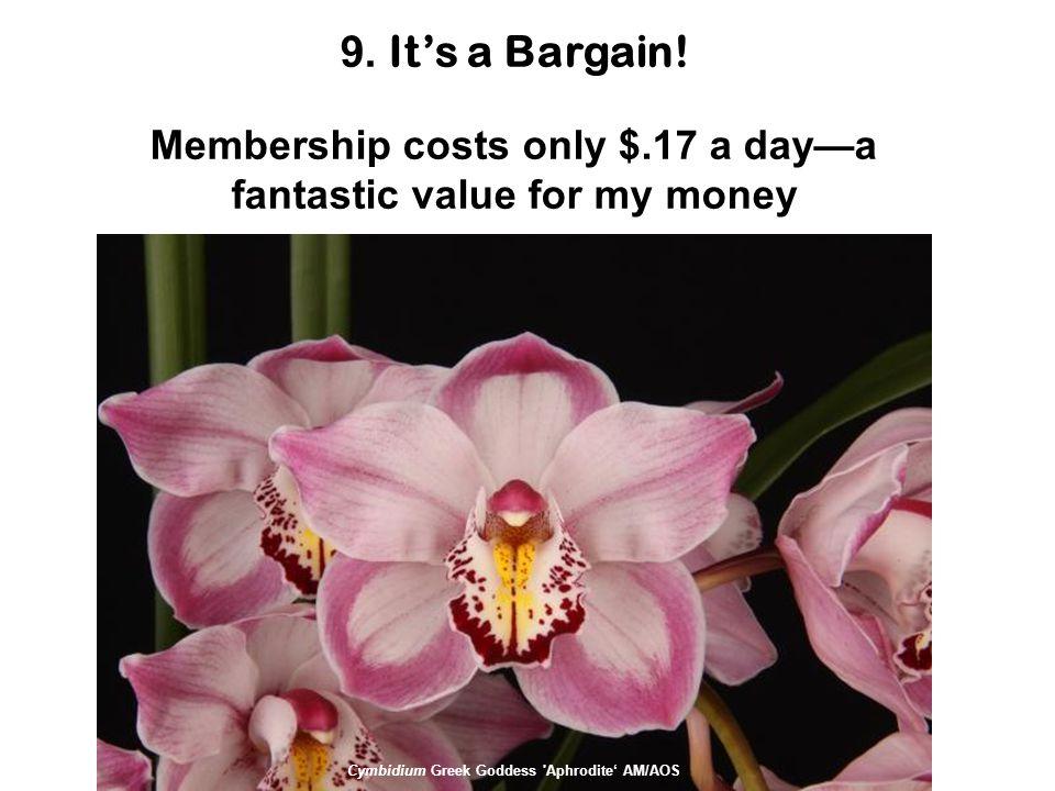 9. It's a Bargain.