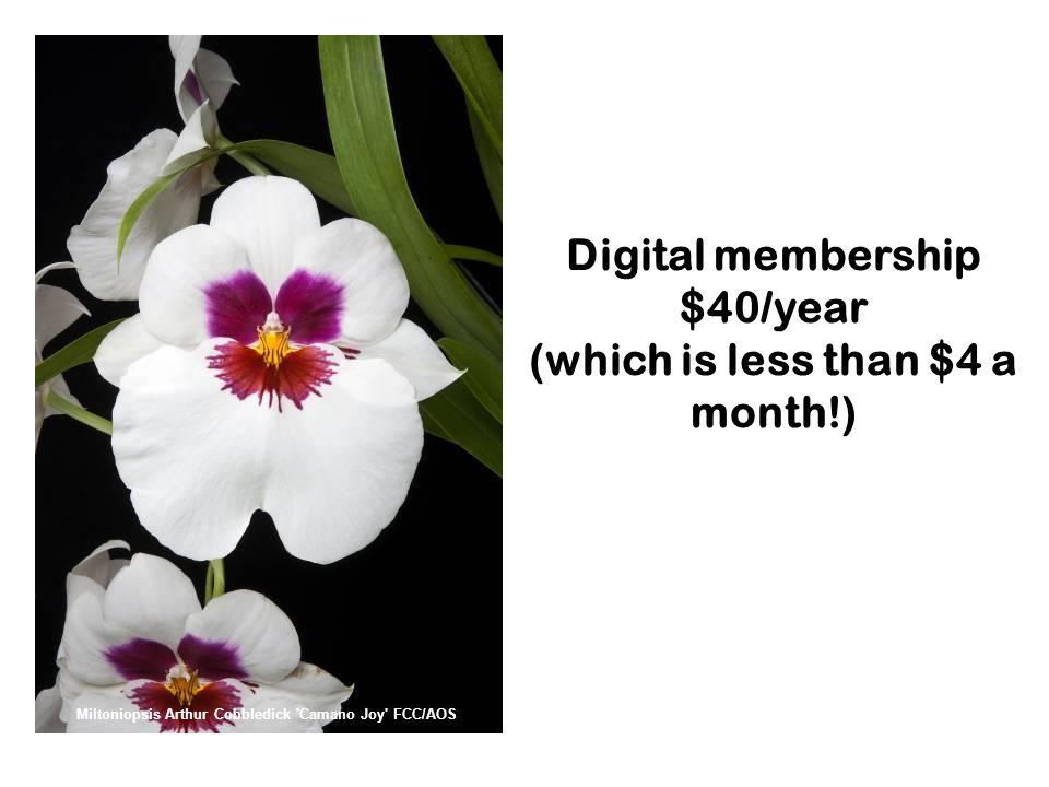 Digital membership $40/year (which is less than $4 a month!) Miltoniopsis Arthur Cobbledick Camano Joy FCC/AOS