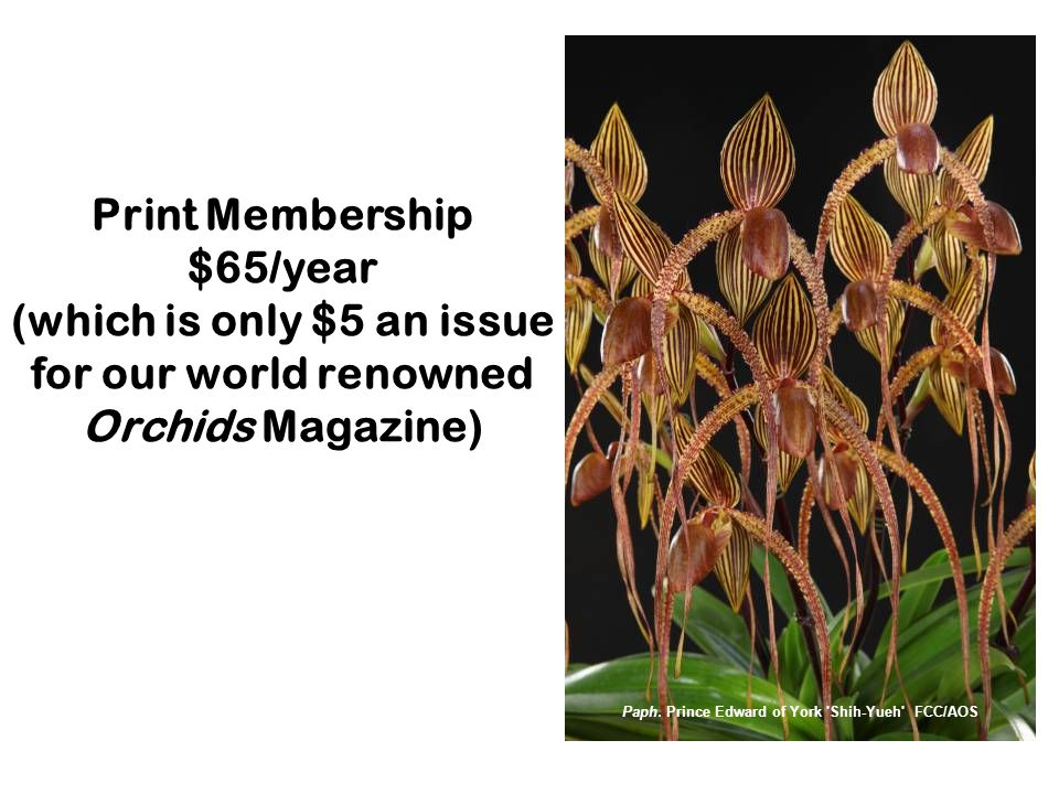 Print Membership $65/year (which is only $5 an issue for our world renowned Orchids Magazine) Paph.
