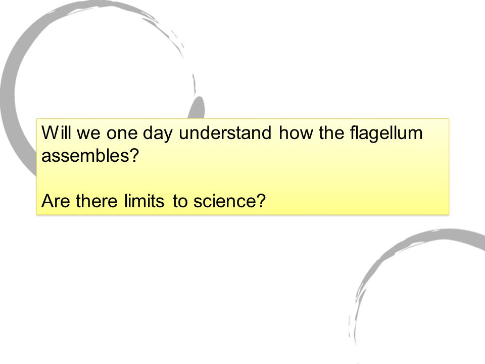 Will we one day understand how the flagellum assembles.
