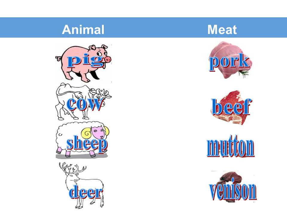 Animal Meat