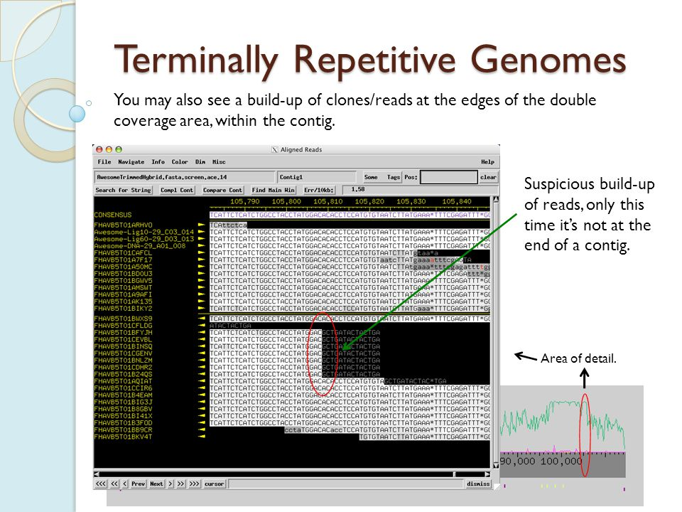 Terminally Repetitive Genomes You may also see a build-up of clones/reads at the edges of the double coverage area, within the contig.