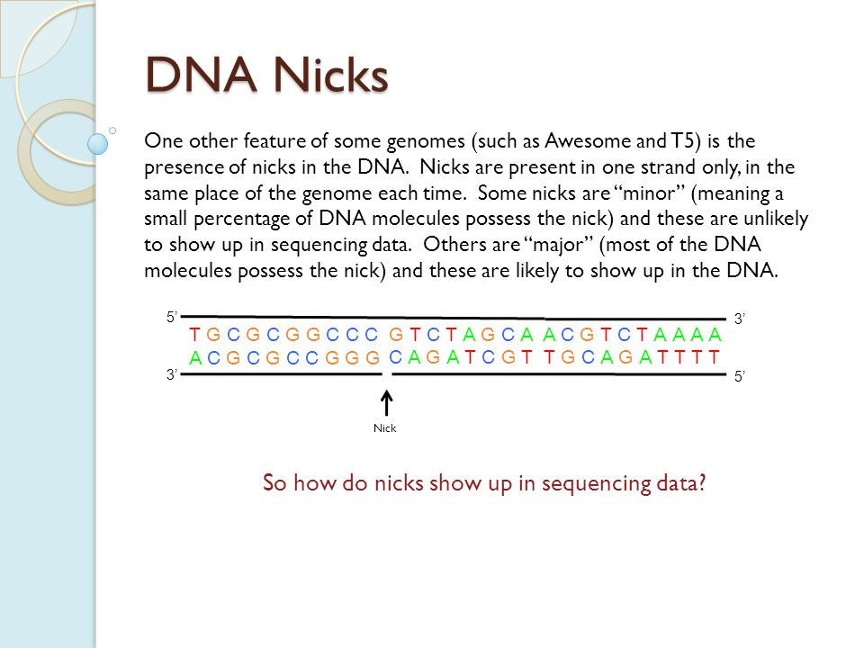 DNA Nicks One other feature of some genomes (such as Awesome and T5) is the presence of nicks in the DNA.