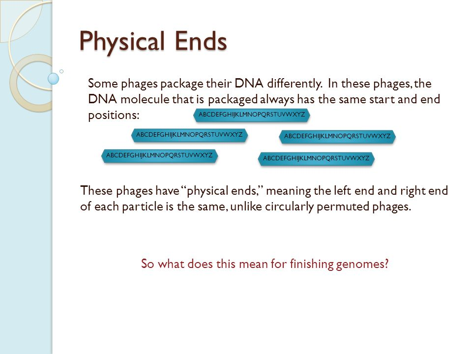 Physical Ends These phages have physical ends, meaning the left end and right end of each particle is the same, unlike circularly permuted phages.