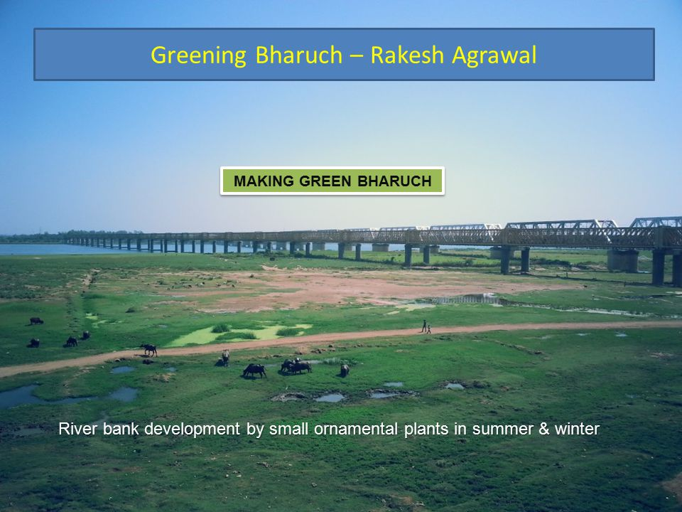 Greening Bharuch – Rakesh Agrawal MAKING GREEN BHARUCH River bank development by small ornamental plants in summer & winter