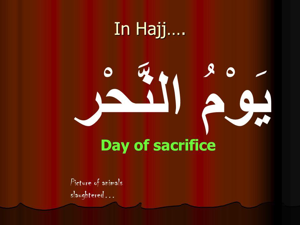 يَوْمُ النَّحْر Day of sacrifice In Hajj…. Picture of animals slaughtered…