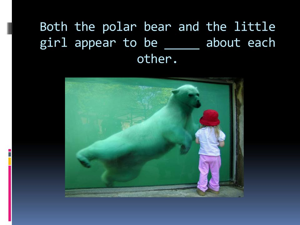 Both the polar bear and the little girl appear to be _____ about each other.
