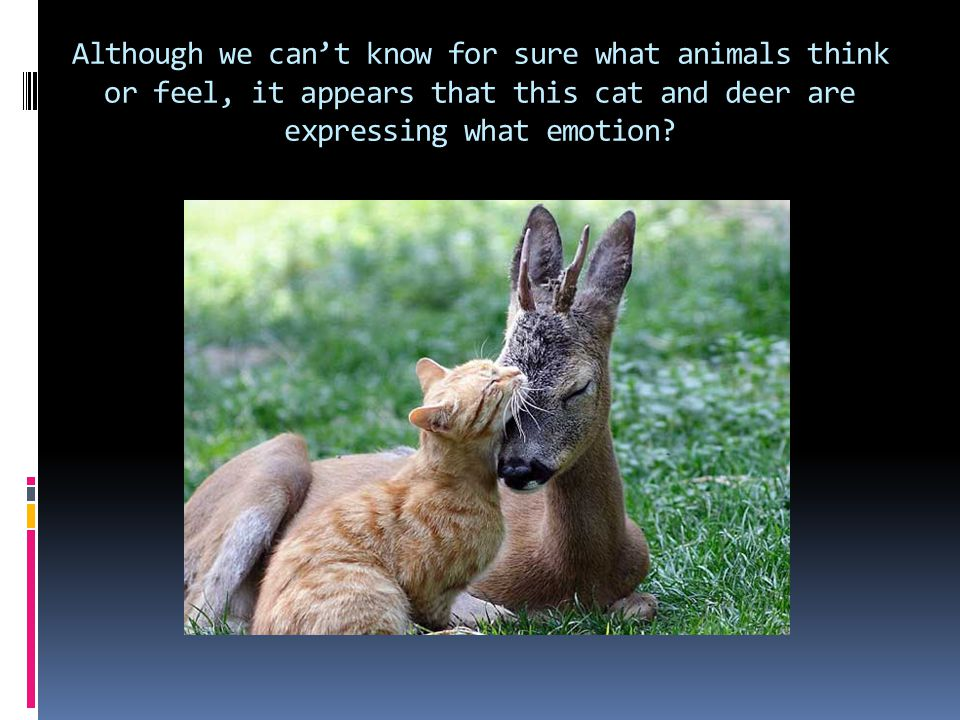 Although we can't know for sure what animals think or feel, it appears that this cat and deer are expressing what emotion?