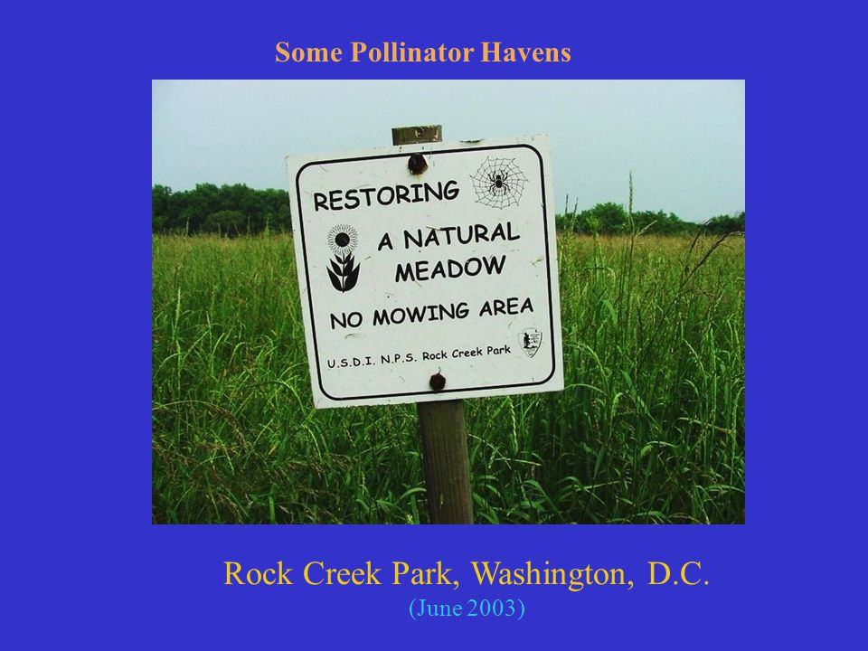 Rock Creek Park, Washington, D.C. (June 2003) Some Pollinator Havens