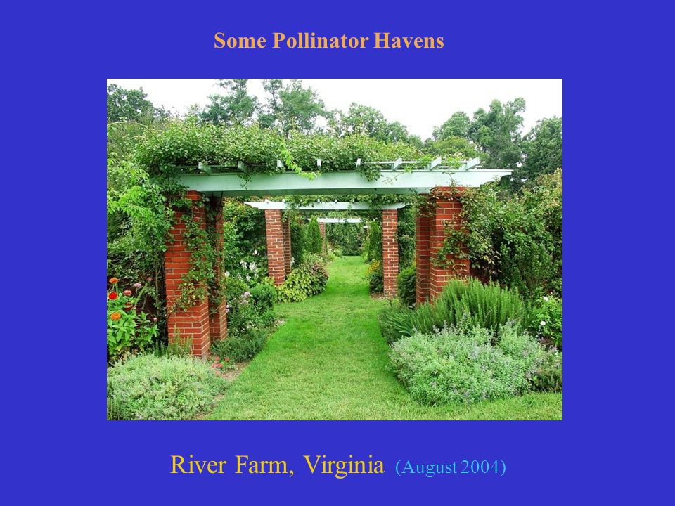 River Farm, Virginia (August 2004) Some Pollinator Havens