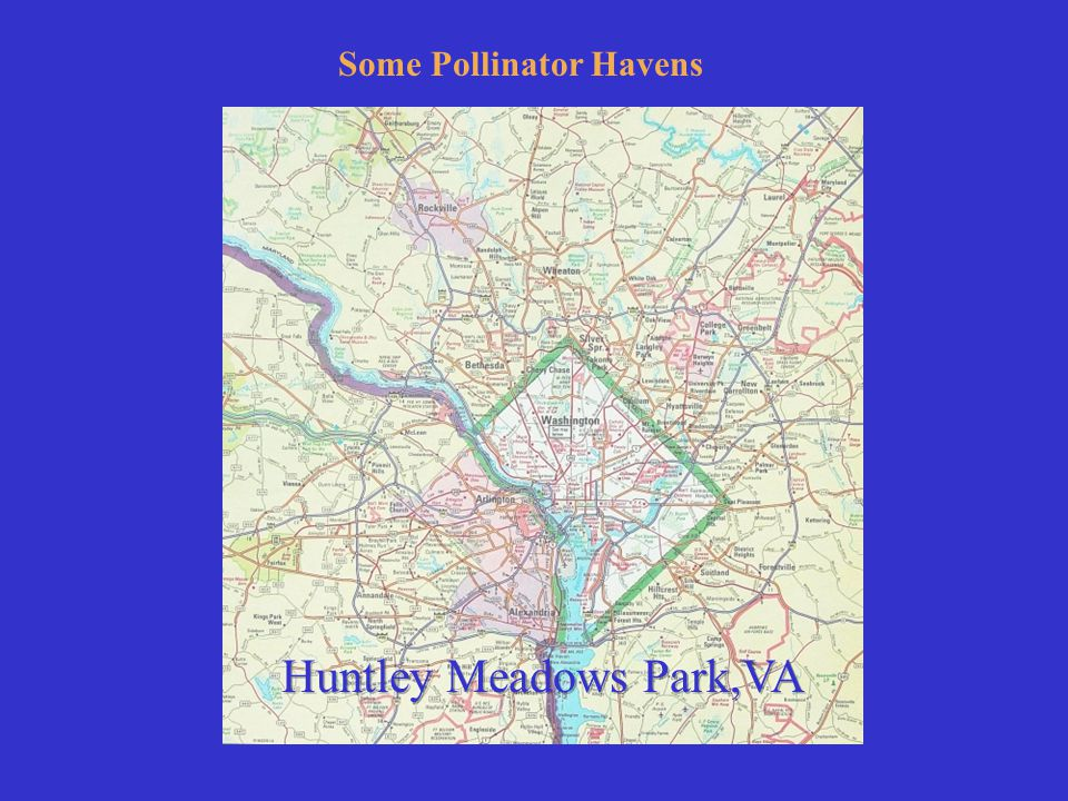 Some Pollinator Havens