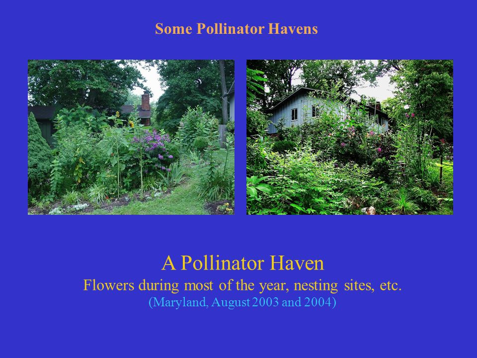 A Pollinator Haven Flowers during most of the year, nesting sites, etc.