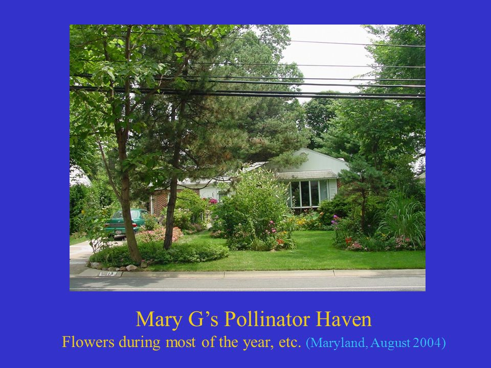 Mary G's Pollinator Haven Flowers during most of the year, etc. (Maryland, August 2004)
