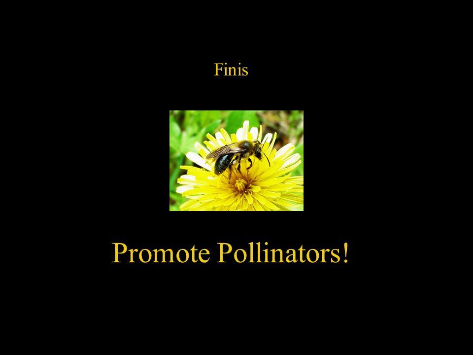 Finis Promote Pollinators!