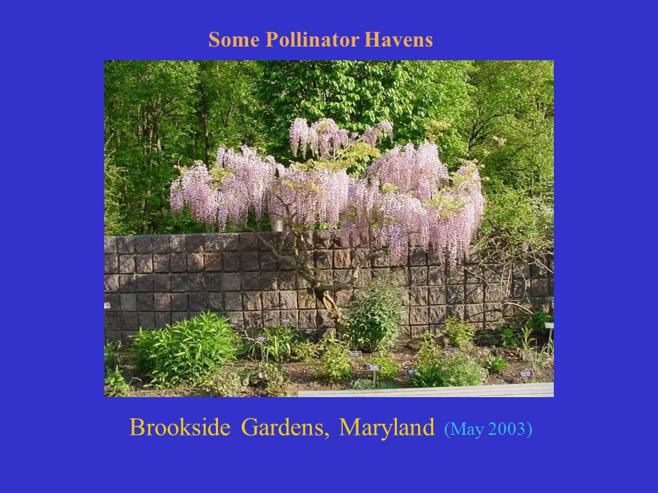 Brookside Gardens, Maryland (May 2003) Some Pollinator Havens