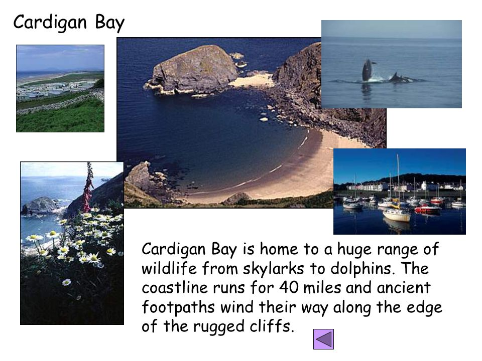 Cardigan Bay Cardigan Bay is home to a huge range of wildlife from skylarks to dolphins.