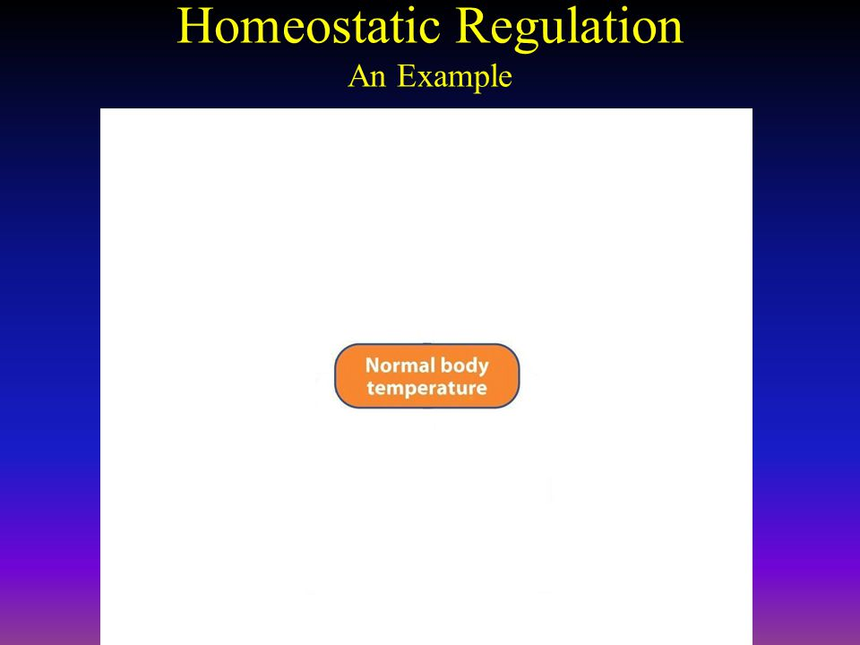 Homeostatic Regulation An Example