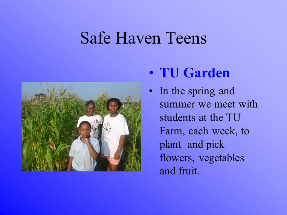 Safe Haven Teens TU Garden In the spring and summer we meet with students at the TU Farm, each week, to plant and pick flowers, vegetables and fruit.