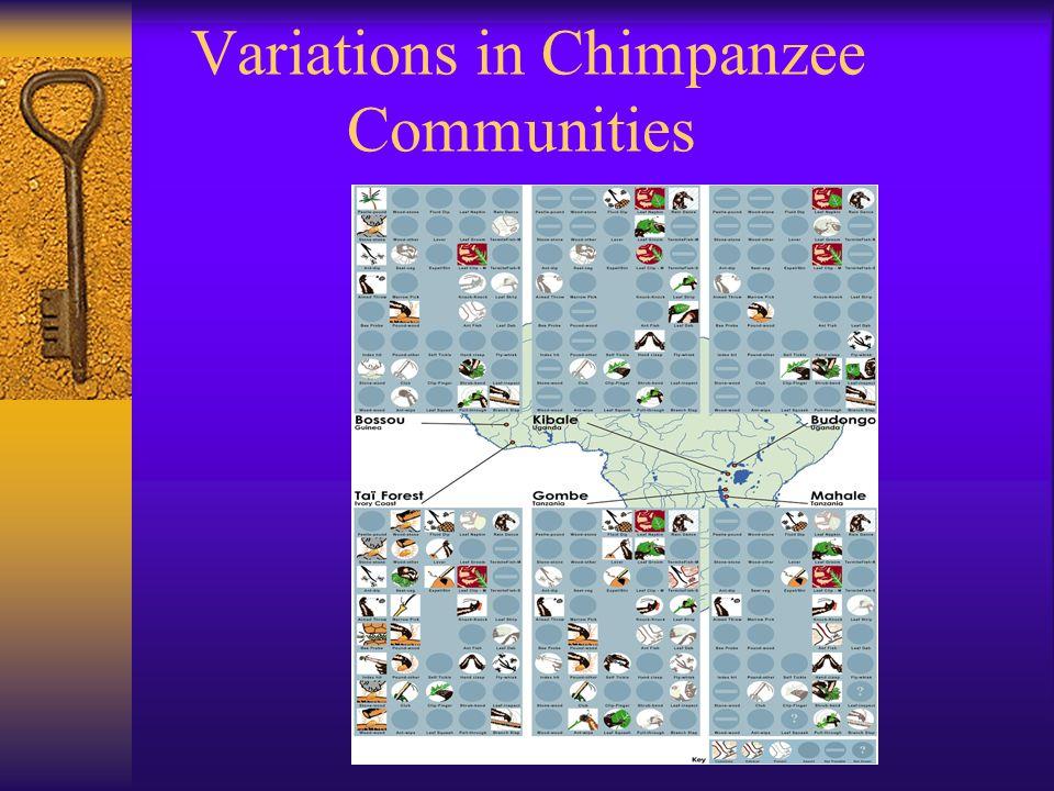 Variations in Chimpanzee Communities