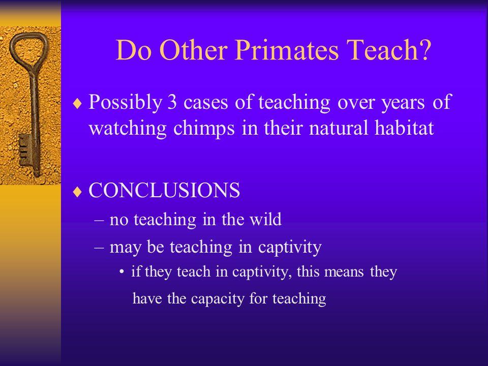 Do Other Primates Teach.