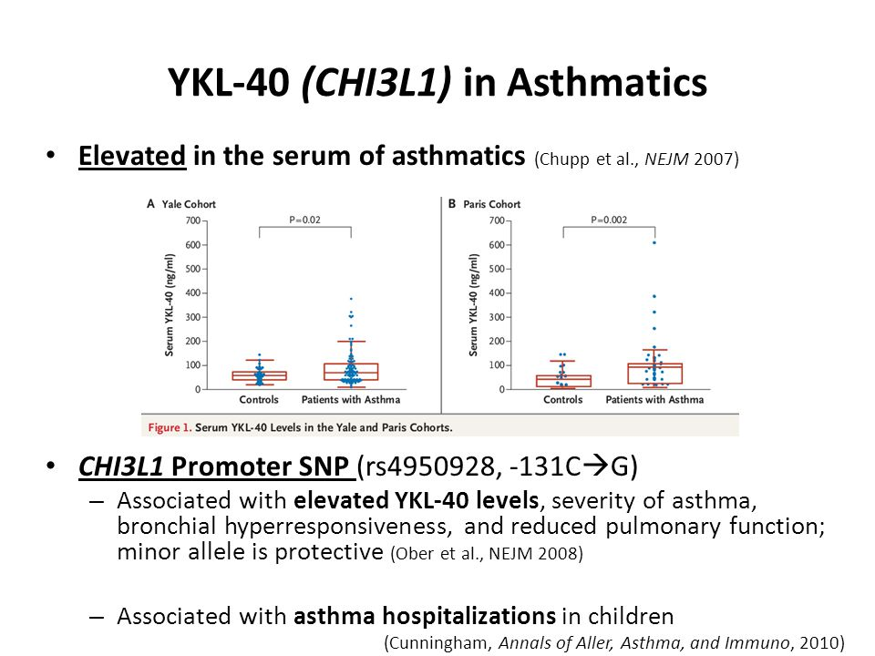 YKL-40 (CHI3L1) in Asthmatics Elevated in the serum of asthmatics (Chupp et al., NEJM 2007) CHI3L1 Promoter SNP (rs4950928, -131C  G) – Associated with elevated YKL-40 levels, severity of asthma, bronchial hyperresponsiveness, and reduced pulmonary function; minor allele is protective (Ober et al., NEJM 2008) – Associated with asthma hospitalizations in children (Cunningham, Annals of Aller, Asthma, and Immuno, 2010)