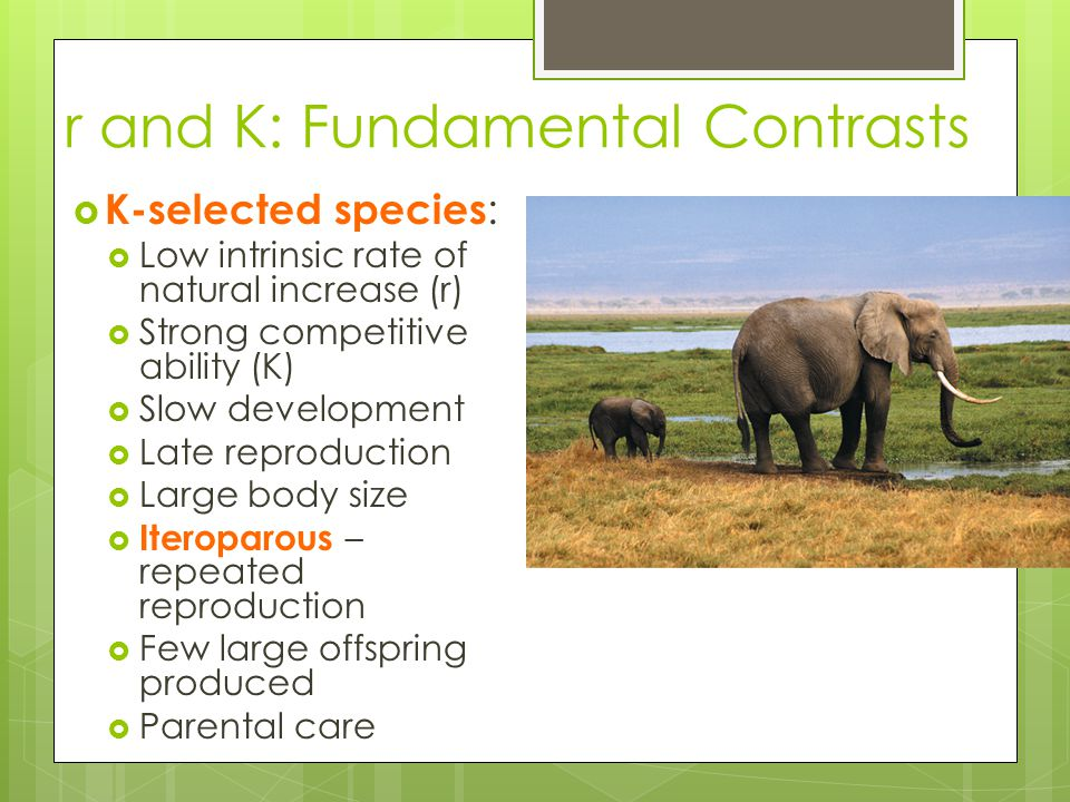 r and K: Fundamental Contrasts  K-selected species :  Low intrinsic rate of natural increase (r)  Strong competitive ability (K)  Slow development