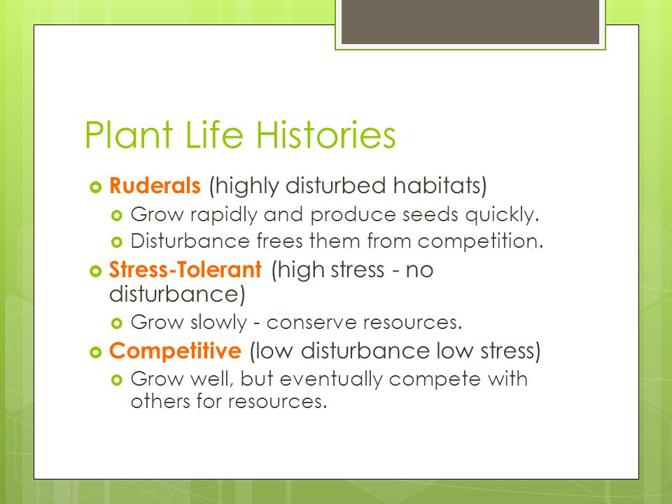 Plant Life Histories  Ruderals (highly disturbed habitats)  Grow rapidly and produce seeds quickly.