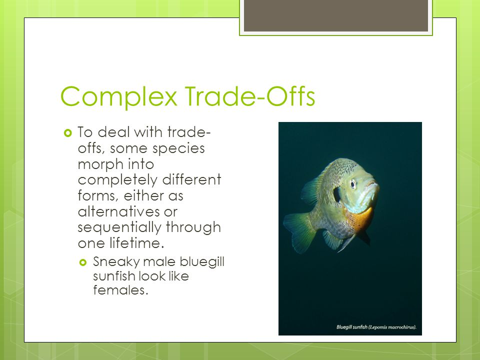 Complex Trade-Offs  To deal with trade- offs, some species morph into completely different forms, either as alternatives or sequentially through one lifetime.