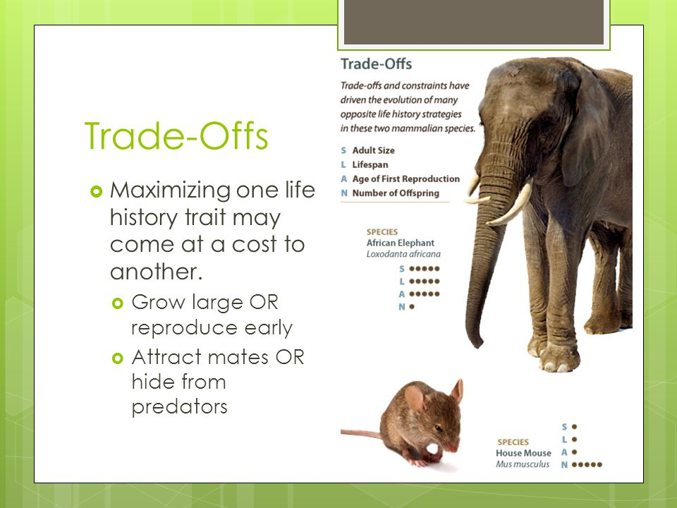 Trade-Offs  Maximizing one life history trait may come at a cost to another.