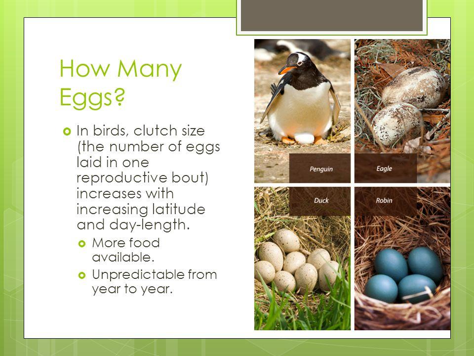 How Many Eggs.