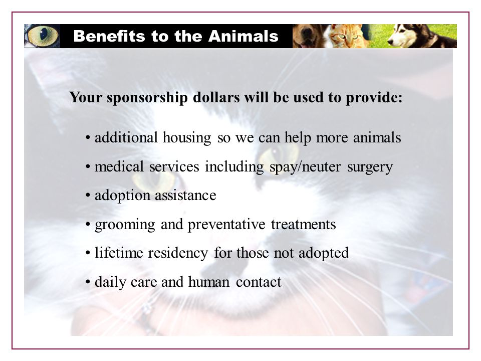 Benefits to the Animals Your sponsorship dollars will be used to provide: additional housing so we can help more animals medical services including spay/neuter surgery adoption assistance grooming and preventative treatments lifetime residency for those not adopted daily care and human contact