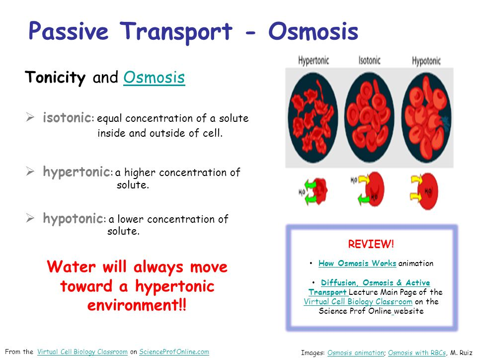 Tonicity and OsmosisOsmosis  isotonic : equal concentration of a solute inside and outside of cell.
