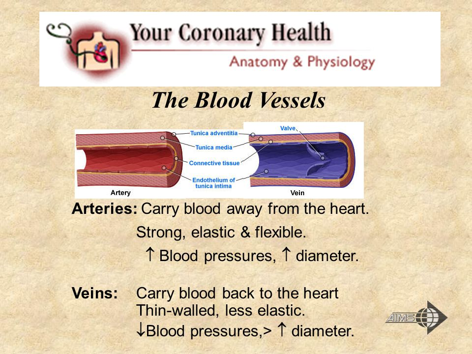 The Blood Vessels Arteries: Carry blood away from the heart. Strong, elastic & flexible.  Blood pressures,  diameter. Veins: Carry blood back to the