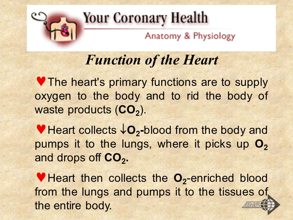 Function of the Heart The heart s primary functions are to supply oxygen to the body and to rid the body of waste products (CO 2 ).