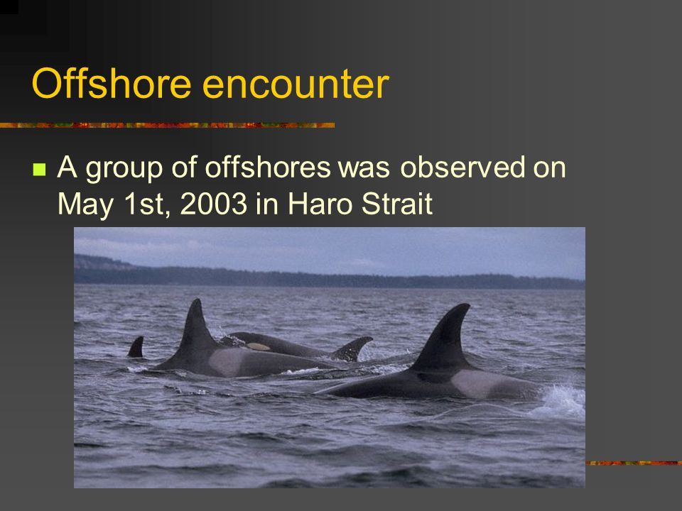Offshore encounter A group of offshores was observed on May 1st, 2003 in Haro Strait