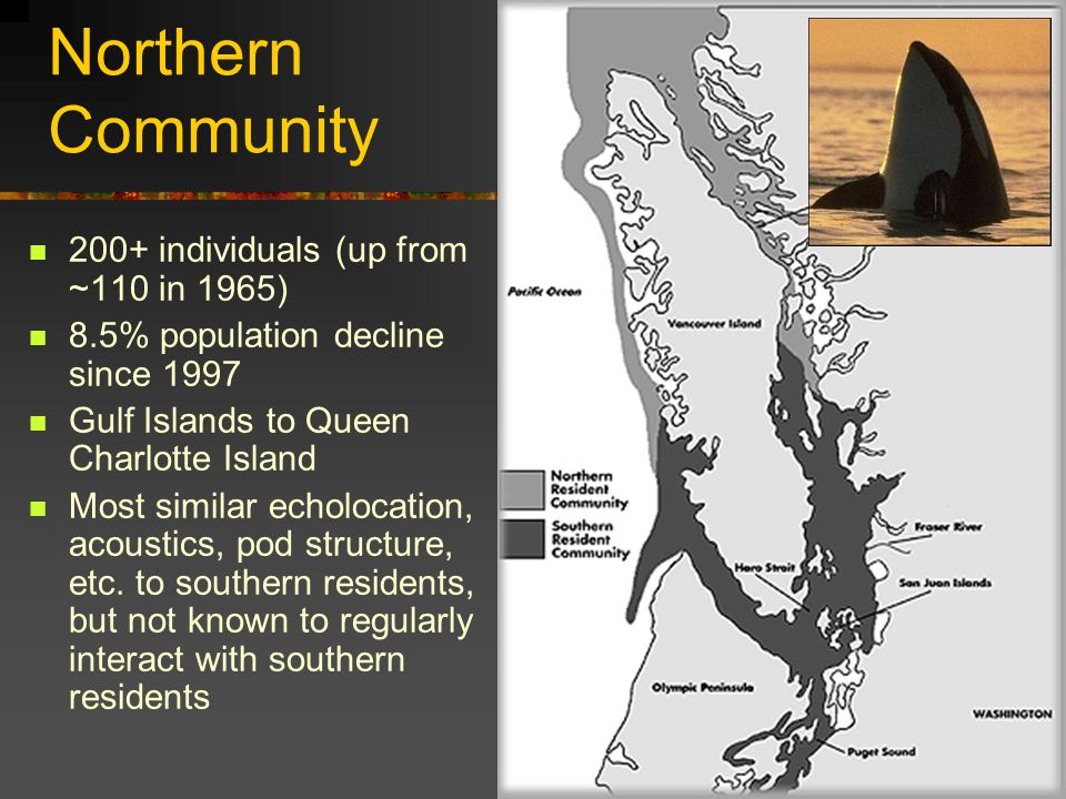 Northern Community 200+ individuals (up from ~110 in 1965) 8.5% population decline since 1997 Gulf Islands to Queen Charlotte Island Most similar echolocation, acoustics, pod structure, etc.