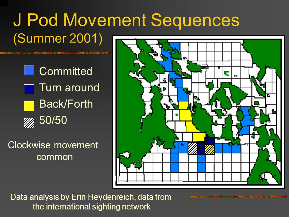 J Pod Movement Sequences (Summer 2001) Committed Turn around Back/Forth 50/50 Data analysis by Erin Heydenreich, data from the international sighting network Clockwise movement common