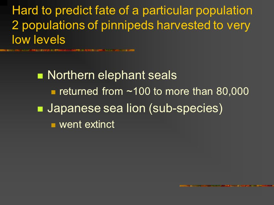 Hard to predict fate of a particular population 2 populations of pinnipeds harvested to very low levels Northern elephant seals returned from ~100 to more than 80,000 Japanese sea lion (sub-species) went extinct