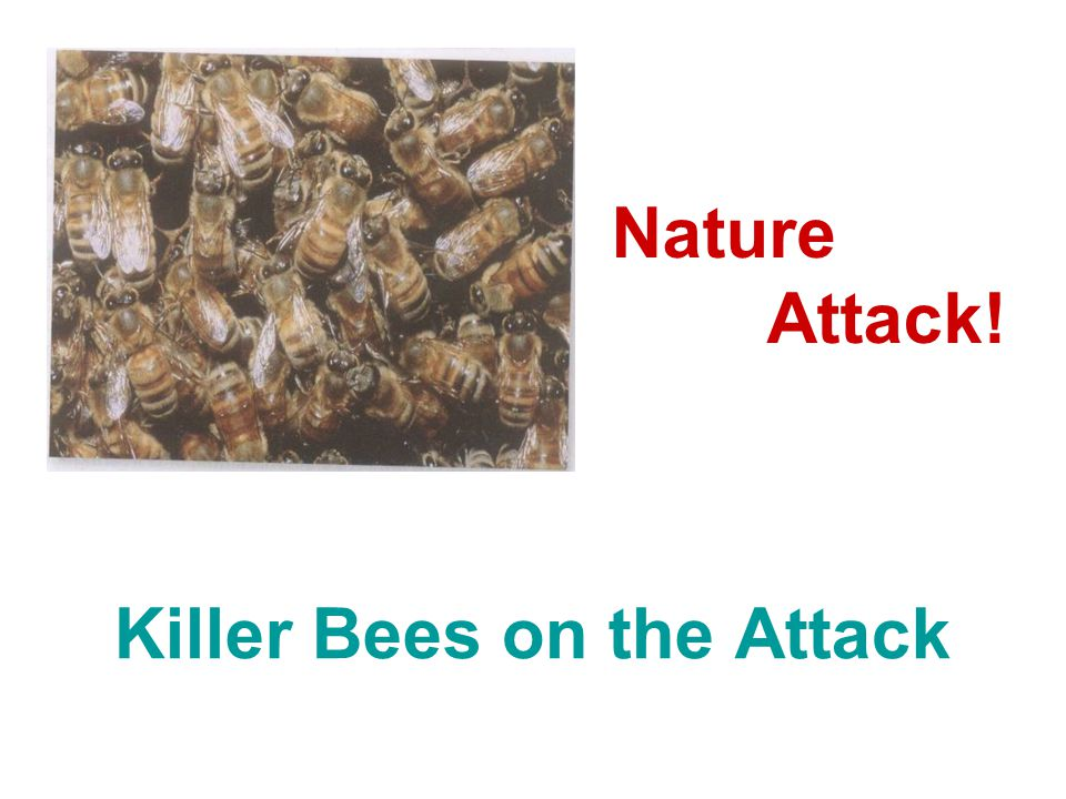 Killer Bees on the Attack Nature Attack!
