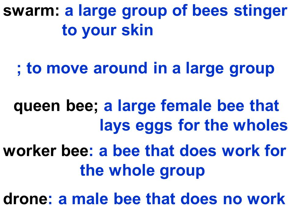 swarm: a large group of bees stinger to your skin ; to move around in a large group queen bee; a large female bee that lays eggs for the wholes worker bee: a bee that does work for the whole group drone: a male bee that does no work