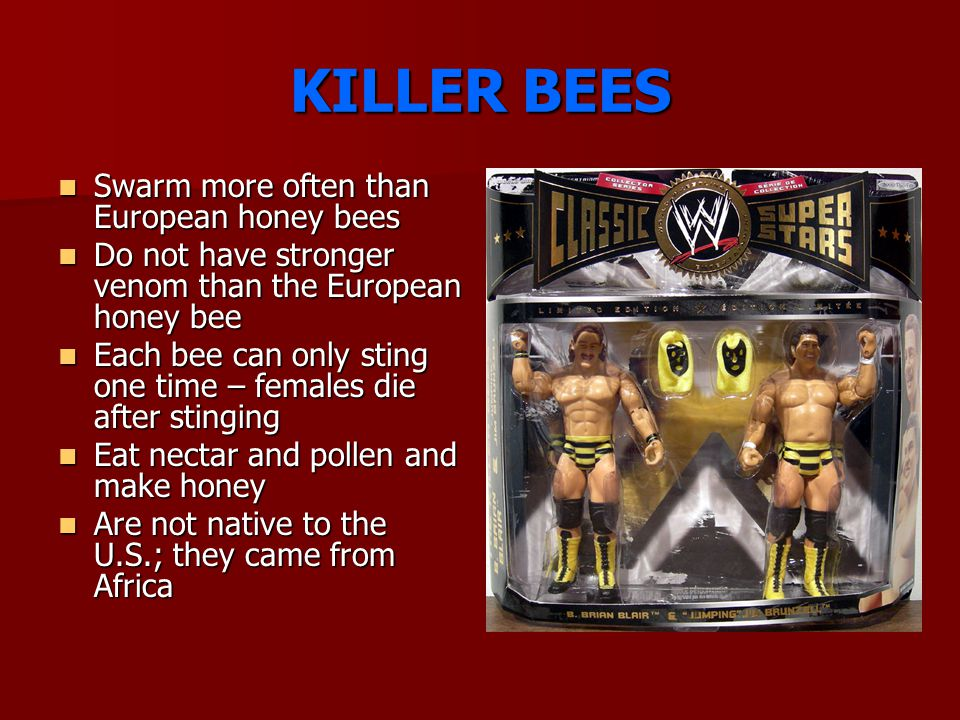 KILLER BEES Swarm more often than European honey bees Swarm more often than European honey bees Do not have stronger venom than the European honey bee Do not have stronger venom than the European honey bee Each bee can only sting one time – females die after stinging Each bee can only sting one time – females die after stinging Eat nectar and pollen and make honey Eat nectar and pollen and make honey Are not native to the U.S.; they came from Africa Are not native to the U.S.; they came from Africa