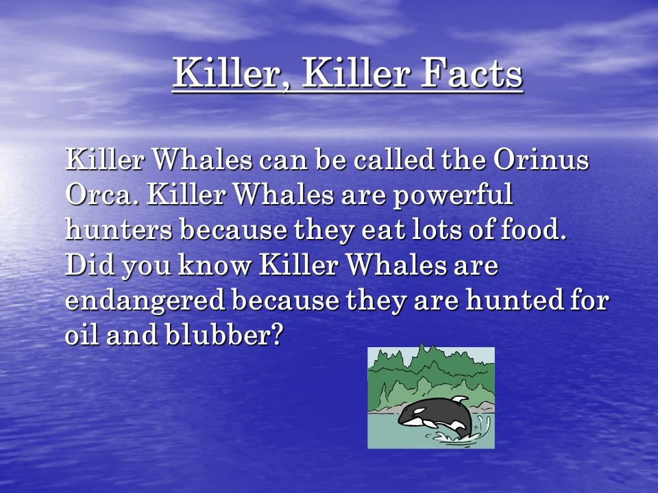 Killer, Killer Facts Killer Whales can be called the Orinus Orca.
