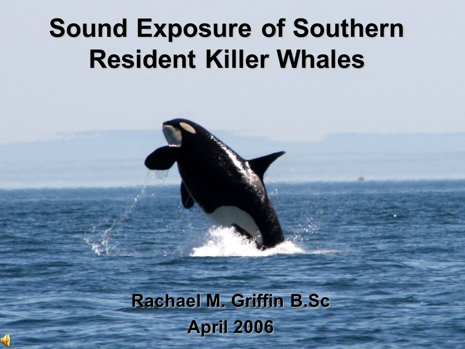 Sound Exposure of Southern Resident Killer Whales Rachael M. Griffin B.Sc April 2006