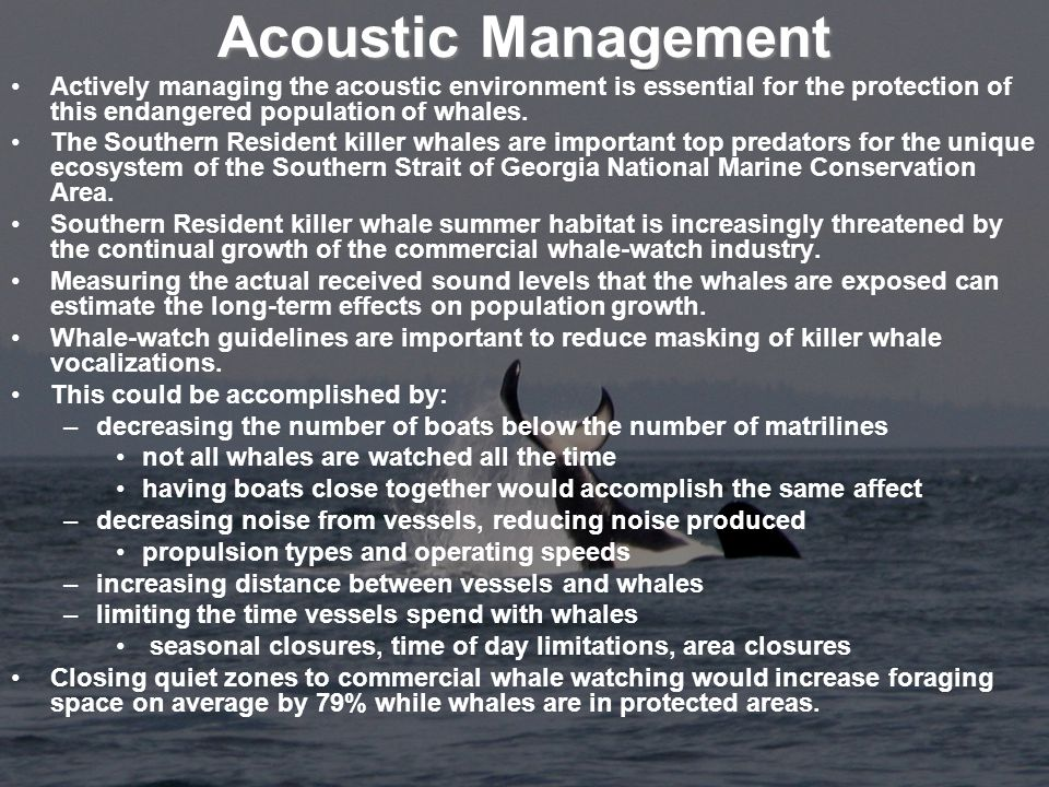 Acoustic Management Actively managing the acoustic environment is essential for the protection of this endangered population of whales.