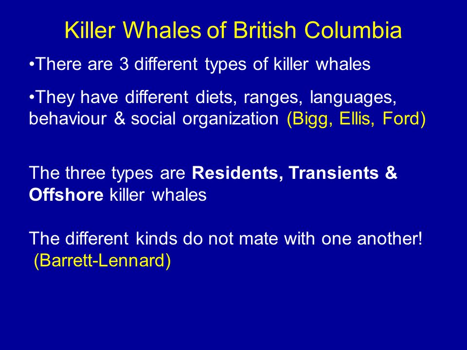 So much is known because killer whales can be told apart as individuals thanks to the work of Dr.
