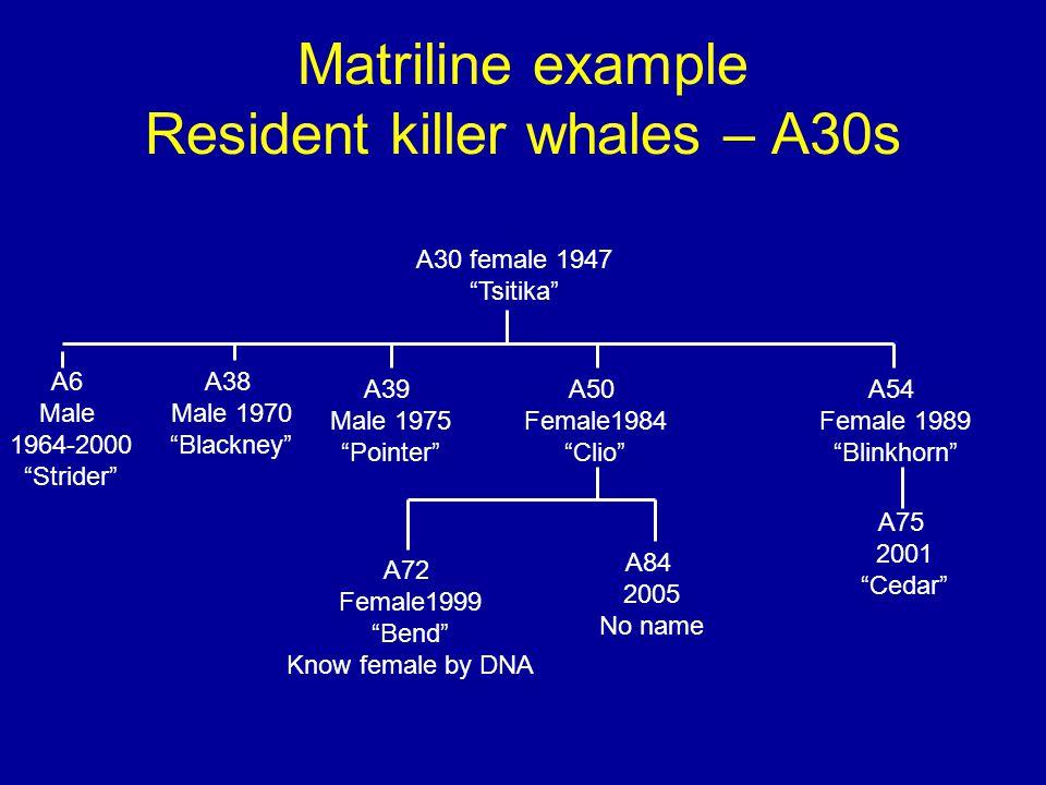 "Matriline example Resident killer whales – A30s A30 female 1947 ""Tsitika"" A38 Male 1970 ""Blackney"" A39 Male 1975 ""Pointer"" A50 Female1984 ""Clio"" A54 F"