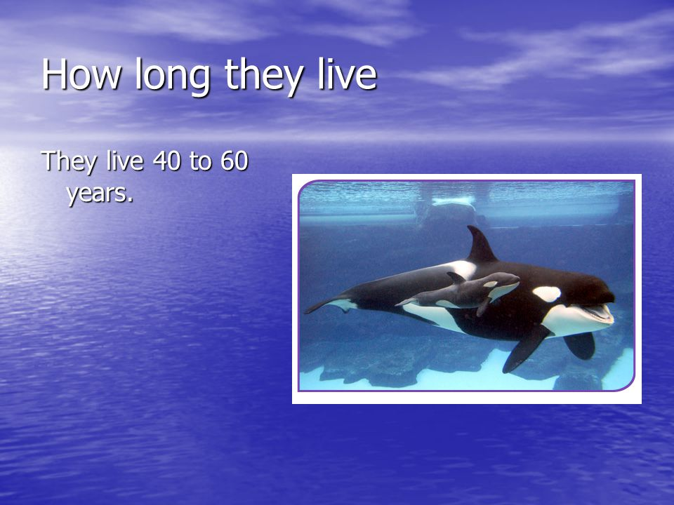 How long they live They live 40 to 60 years.