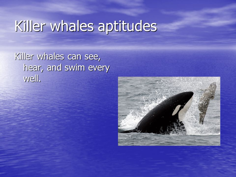 Killer whales aptitudes Killer whales can see, hear, and swim every well.